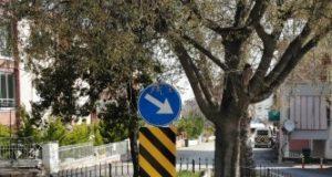 Yol ortasından kaldırılamayan mezar